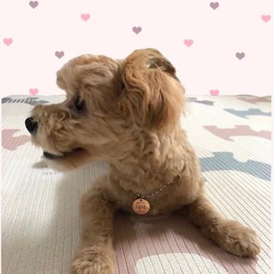 [ALWAYS WITH] 변색없는 강아지 인식표(실버 볼체인)