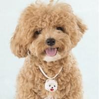 [펫스텝]강아지 각인 목걸이/애견,반려견,개 이름표 딸랑이 목걸이