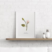 비기닝 장미 꽃 액자 보테니컬 그림 인테리어 포스터