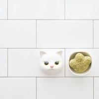 앙펫 그린&캣닢 펫바디솝(CAT)
