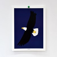 [카멜앤오아시스] Night Flight 흰머리수리 포스터