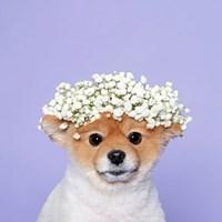 꽃개 하세요!