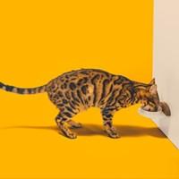 오브제가 되는 고양이용품