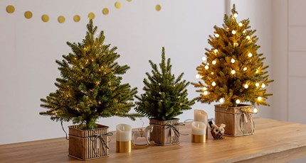 Greenery Christmas <span style=color:red>~15%</span>