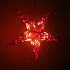 shining star-Jasmine
