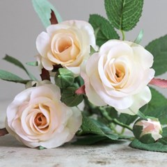 로맨틱 싱글 로즈