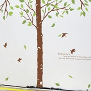 자작나무한그루A