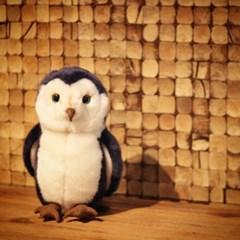 Dazzling Blue Owl - 대즐링 블루 오울
