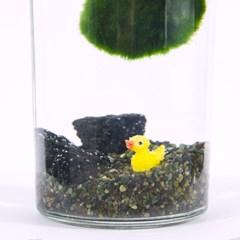 노란 잠수함 - 마리모DIY키트