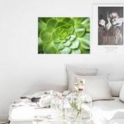 꽃그림 북유럽 인테리어 식물사진 나뭇잎 액자