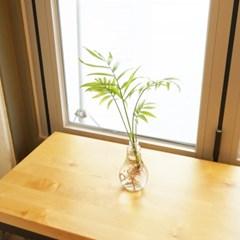 전구화병 공기정화 수경식물_테이블야자