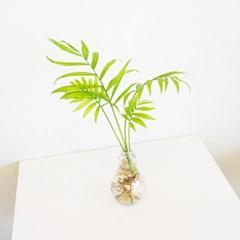 전구화병 공기정화 수경식물 3 SET_테이블야자.홍콩야자.아이비