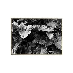 에포크 - 보타니컬 no.3 (50x70cm) framed