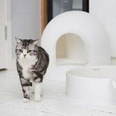 이글루 고양이 돔하우스