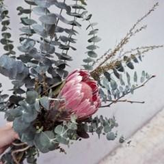 프로테아 유칼립투스 꽃다발