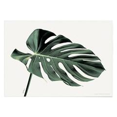 포스터 식물 나뭇잎 몬스테라 꽃 인테리어 (액자 미포함)