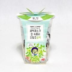 한컵새싹농장_밀싹