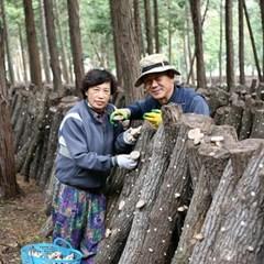 장흥 편백숲에서 키운 유기농 표고버섯 선물세트