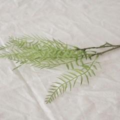 후추잎 가지_(743629)