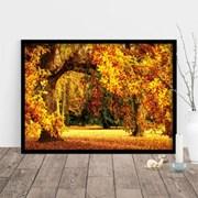 1000조각 직소퍼즐▶ 오크나무의 화려한 가을 단풍 (PK1000-3107)
