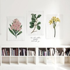 패브릭 포스터 F014 식물 그림 보타니컬 아트 플라워C