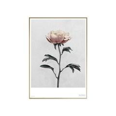 에포크 -산작약(BOTANICA Paeonia) Framed