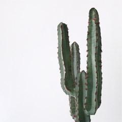 Desert 선인장 블랙 포트(65cm)