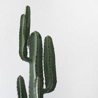 멕시칸 선인장(120cm)