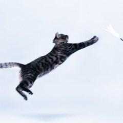 피단스튜디오  고양이 원목깃털봉 장난감
