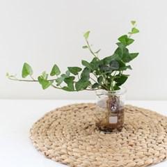 비이커 수경식물(아이비&테이블야자)