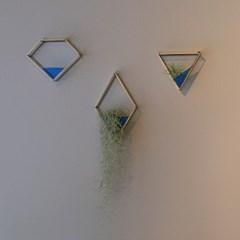 ocean 테라리움 - 다이아몬드