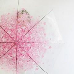 체리블라썸 투명우산/ 벚꽃 장우산