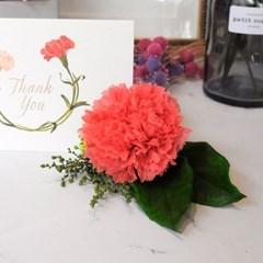 CORSAGE CARNATION_프리저브드플라워 카네이션 (시들지 않는 꽃)