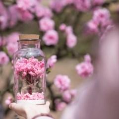 향기꽃나무 L