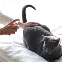 젠아쿠아 반려동물 살균소독 (휴대용)