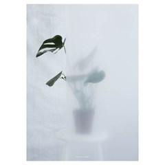 Kristina Dam Studio Philodendron II Poster