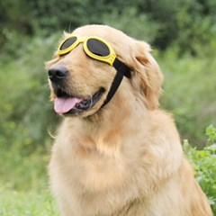 펫디아 강아지 턱끈 선글라스