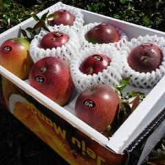 애플망고 3kg애플망고 특상품/과일의 황제/산지직송