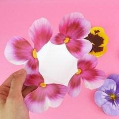 팬지 카드 Pansy Flower Card