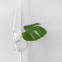 몬스테라 화병 SET(절화식물)
