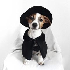 Miyopet 마법사 고양이옷 강아지옷 코스튬 할로윈