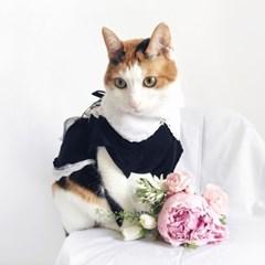 Miyopet 메이드복 고양이옷 강아지옷 코스튬 할로윈