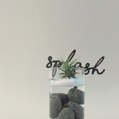 네버랜드 식물키트 [mini KIT]