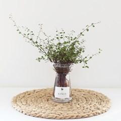드레스 화병 + 수경재배 공기정화식물