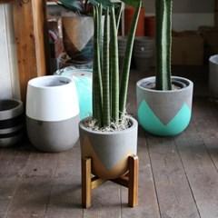 스투키 산세베리아 중형화분 Nordic color premium pot(m)