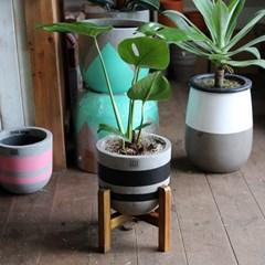 몬스테라 델리치오사 중형화분 Nordic color premium pot(m)