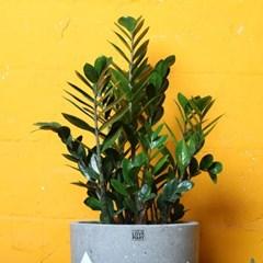 돈들어오는 금전수 대형화분 Nordic color premium pot(L)