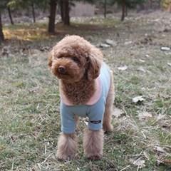 앙고라 솜사탕 강아지 티셔츠
