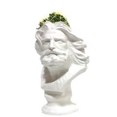 인테리어 석고상화분 히게 20cm내외 공기정화식물 선인장 화분