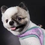[핏독] fitdog - BlingBling Harness (Violet)